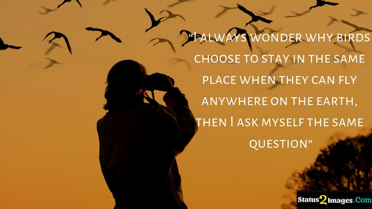 I always wonder why birds choose to stay in the same place when they can fly anywhere on the earth, then I ask myself the same question- Motivational Quotes